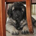 Keifer at 8 weeks