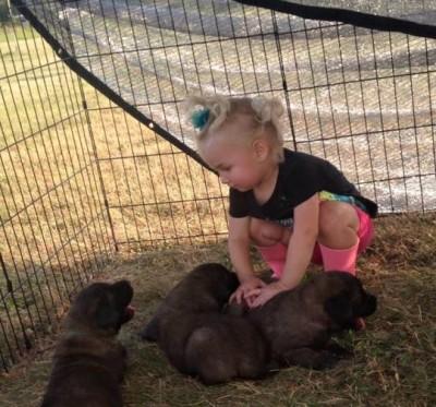 Chance puppies